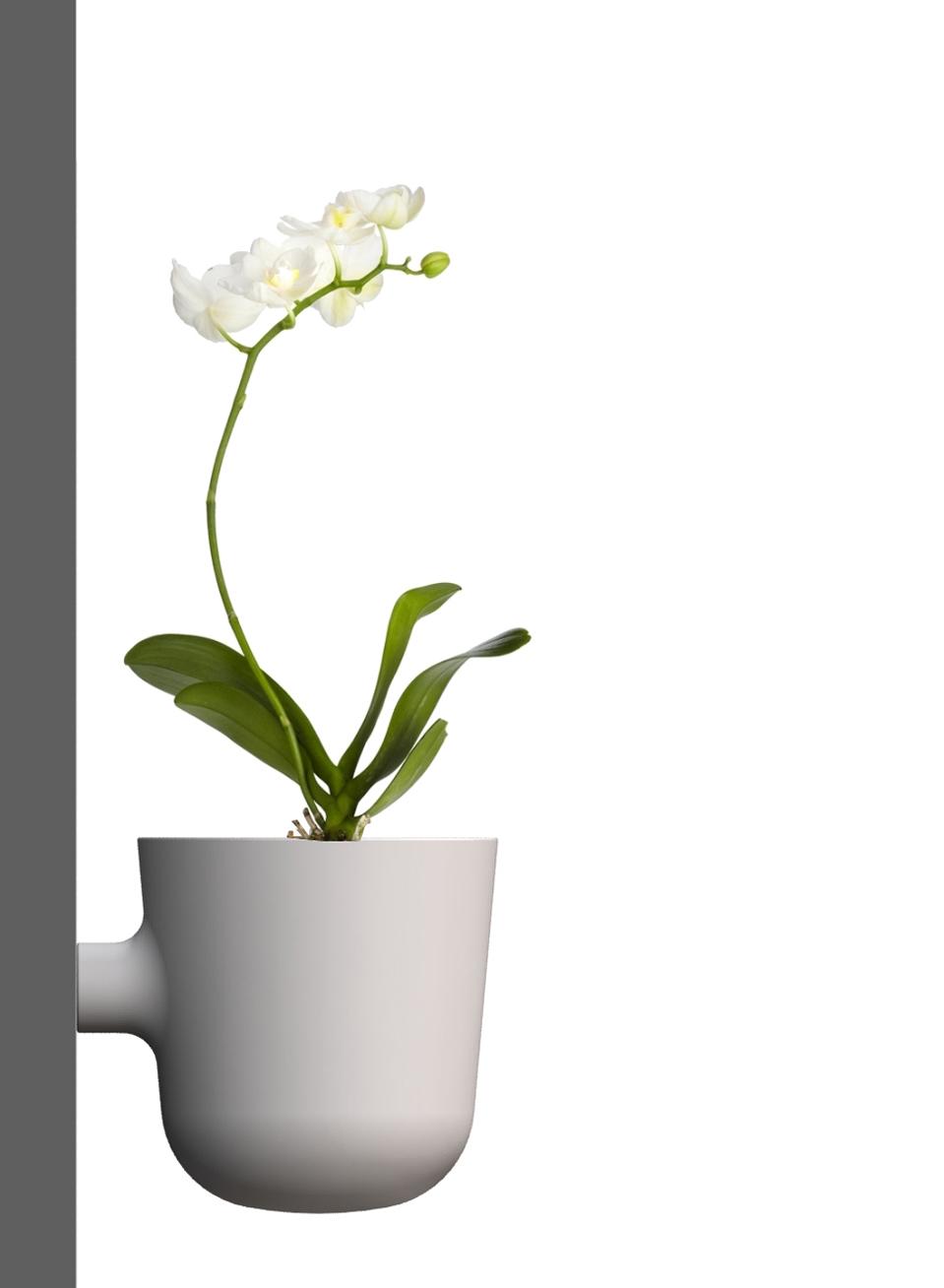 -Side billede af WP_02 på væg med plante (orkide).